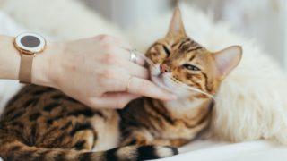 横浜で保護猫を貰う・探す方法と保護猫を貰う際の注意点