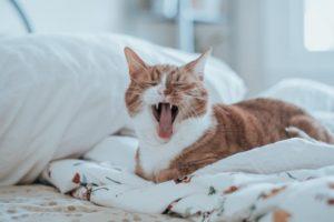 一人暮らしで初めて猫を飼う人へ~失敗しないための心構えや準備について~