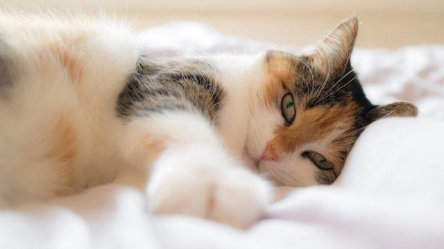 2泊3日の予定で家を空けるけど、猫ちゃんだけでお留守番はできる?留守番させるならどうすればいい?