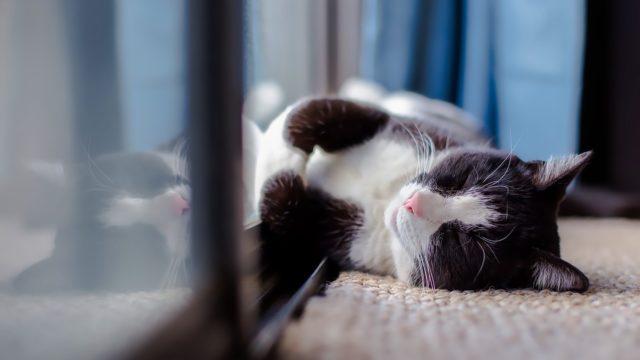 寒がりな猫の冬のお留守番、寒さ対策はどうすればいい?オススメの方法と注意点