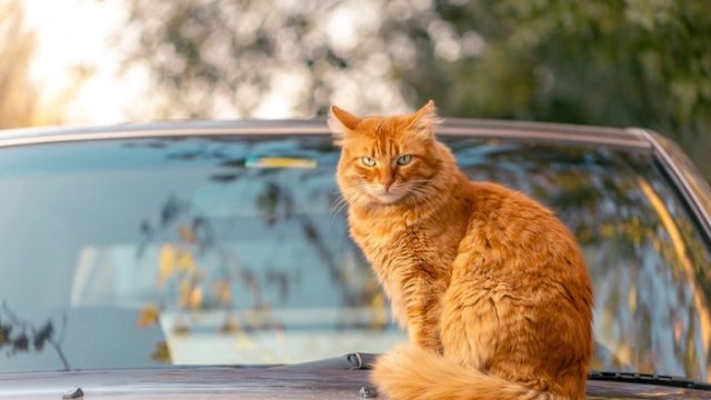 猫の引っ越し、移動や新居でのストレスは大丈夫?最適な移動方法や引っ越し後の注意点