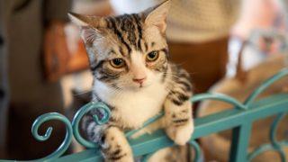 猫は引っ越しに弱い!?ご飯食べない・トイレしない・夜に泣く時の対処法は?