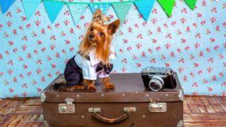 ペットホテルに1週間ペットを預けても大丈夫?留守中のペットがより快適に過ごすための対策とは