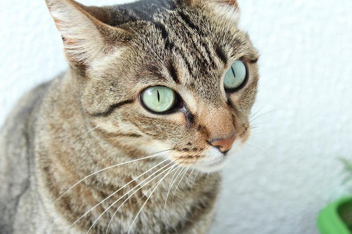 猫は留守番を寂しいと感じる?猫に留守番させる時の注意点