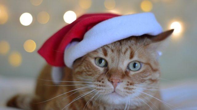 寒い冬に猫に留守番してもらう時は暖房器具が重要