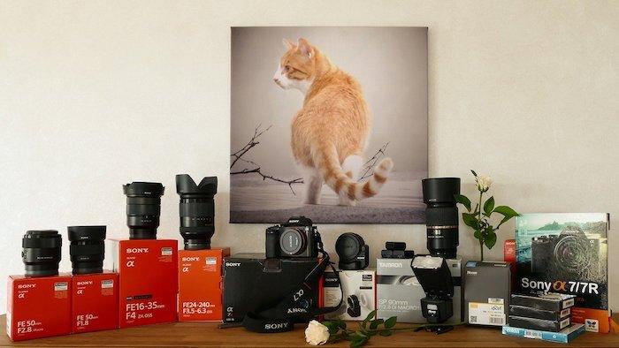 猫ちゃんだけのお留守番中の様子が見たい!そんなときはペットカメラがおすすめ