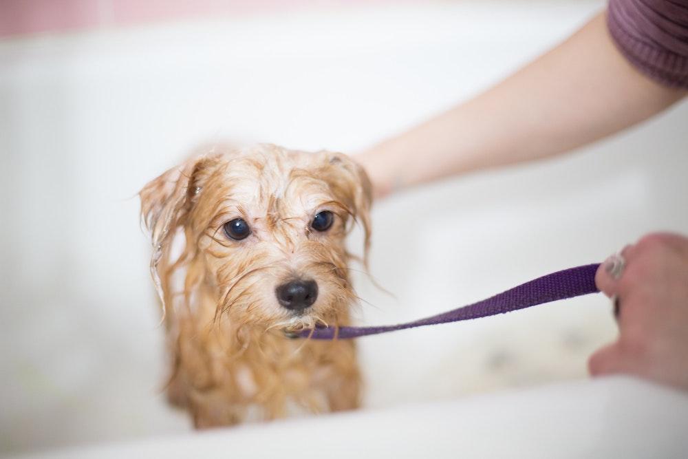 気になるペットの匂い、原因と対策、消臭の方法まで徹底解説!猫と犬の違いも