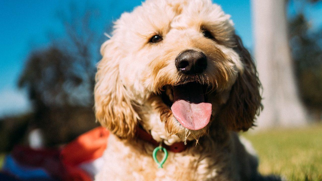 すごい!ペットがなぜ人を癒すのか?解説-ペットの癒し効果は生活の質を高めることが判明