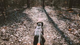 飼い主さんに予定が入ってしまった、体調不良でお散歩に行けない!そんな時ペットの散歩代行って?